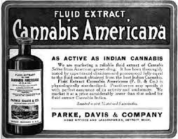 Cannabis America lable
